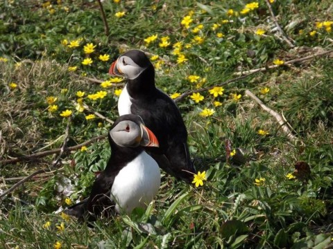 Lunga (Treshnish Isles)