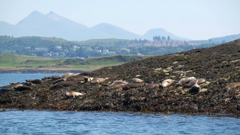 1 Hour short trip to the seal colony.