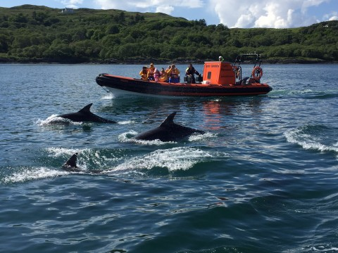 Corryvreckan Wildlife Tour