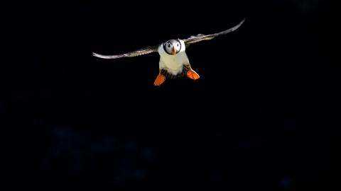 Focus on Shetland - Wildlife Photography