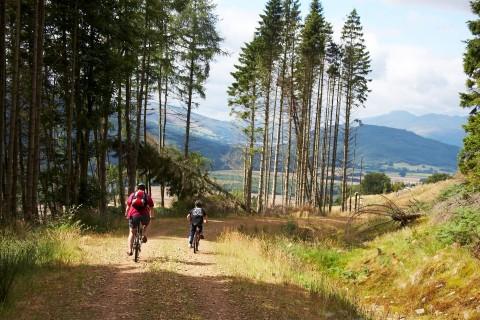 Drop at the Top Mountain Biking Safari