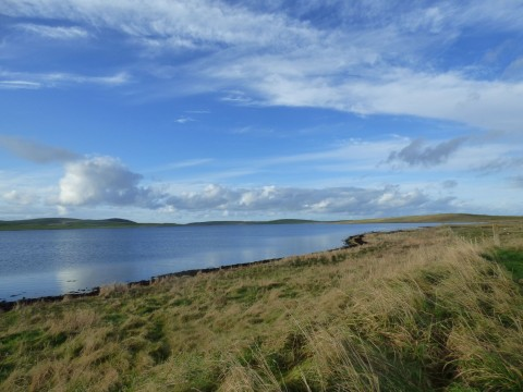 Brodgar Wildlife Walk