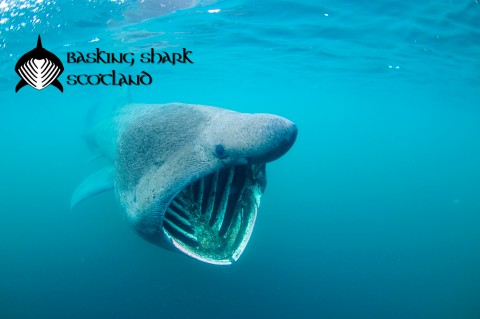 Basking Shark Tour