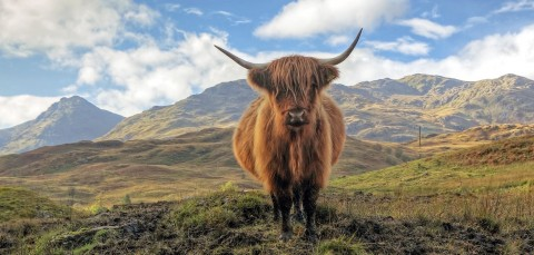 Happy Tours Scotland Cairngorm Mountains, Outlander and...