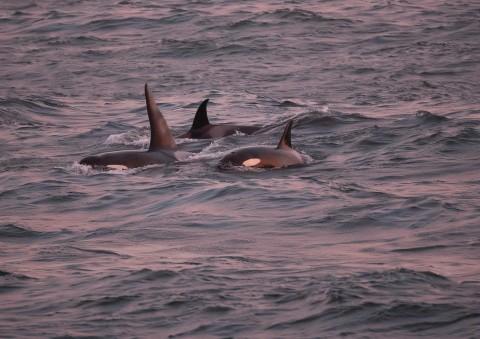 Shetland's Winter Wildlife