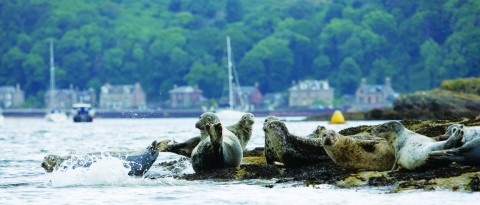 Coastlines and Castles of Argyll and the Clyde