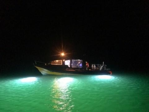 Night Snorkelling & Swimming