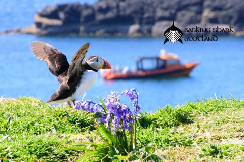 Puffin & Wildlife Tour