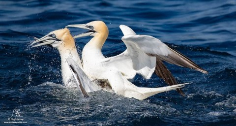 Noss Boat Tours - Afternoon Wildlife Trip Around Noss N...