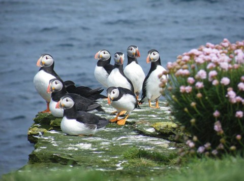 Bespoke Orkney Tour with Great Orkney Tours