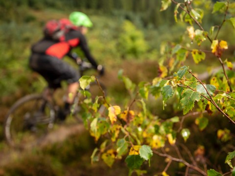 'Duke's Gold' :: Loch Lomond & Trossachs Weekend Gravel...