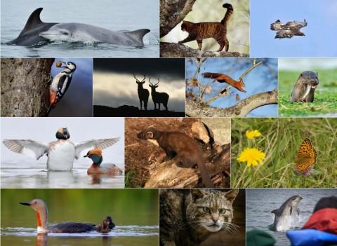 Aigas Wildlife