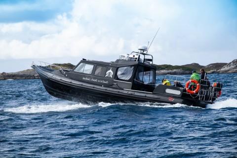St Kilda, Mingulay & Barra Basking Sharks