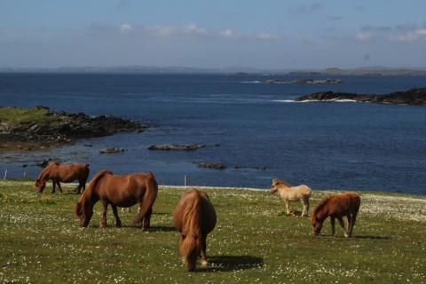 South Mainland Tour - With Discover Shetland