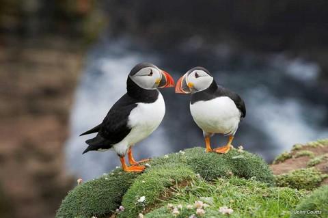 Bespoke Tour of Shetland with Lara - Shetland Tour Guid...