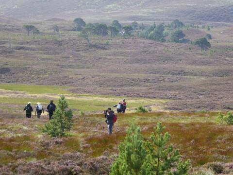 Walking, Whisky and Wildlife