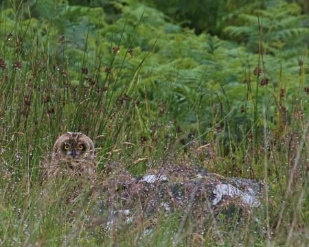 Wild Eskdale - Half Day Wildlife Experience