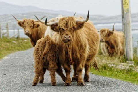 Best of Lowland Scotland in a Day