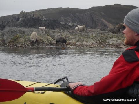 Sea Kayak Taster Session, Shetland
