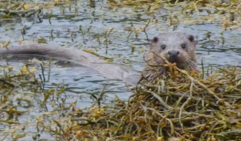 Wildlife watching day trip