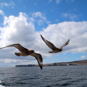 NO.1 NOSS BOAT - LATE AFTERNOON NOSS TOURS WITH SEABIRD...