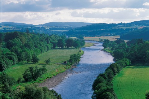 Wildlife walks along the river Spey